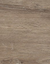 Oak 6504