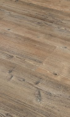 Pine 4205